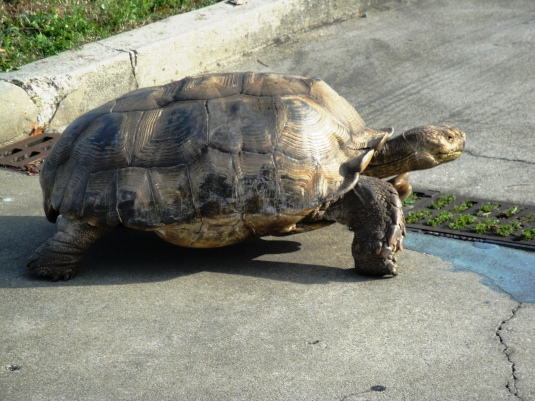 A Tortoise New Year to You!